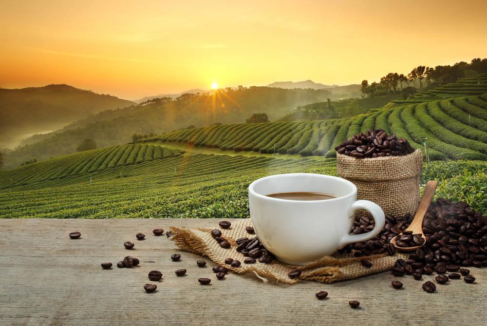 El placer de saber tomar café